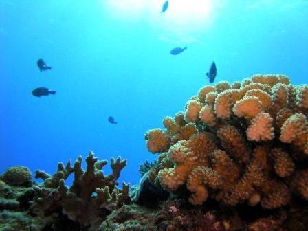 Taiwan's Most Spectacular Coral Reef in Lanyu(Orchid Island)