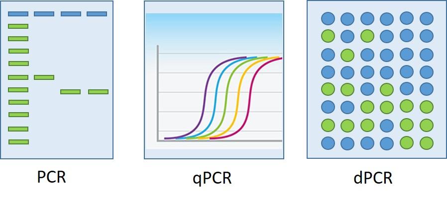 PCR技術演進
